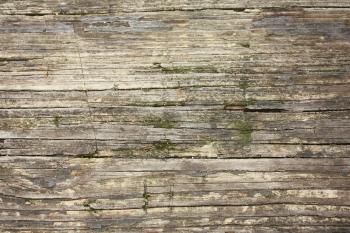 Close-up of wood grain with moss