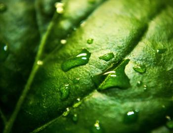 Close Up Photo a Water Moist Green Leaf