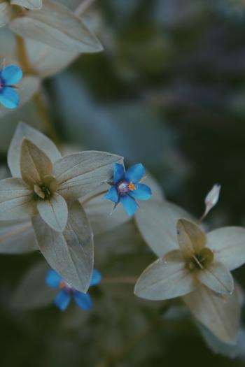 Close-up Photo of Blue and Grey Flower