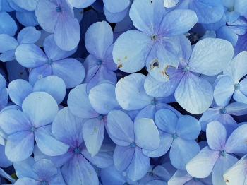 Close-up Photo of Blue Petaled Flowers