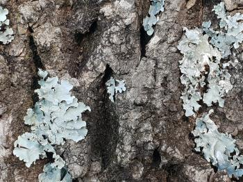 Close-up Photo of Tree Bark