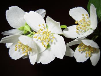 Close Up Photo of White Petaled Flower