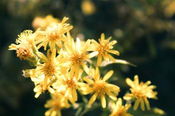 Close-Up Photo of Yellow Petaled Flowers