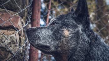 Close-up Photography of a Dog