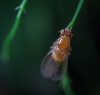 Close-up Photography of Brown Fly on Leaf Branch