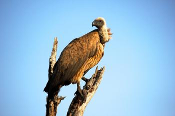 Close-Up Photography of Brown Vulture
