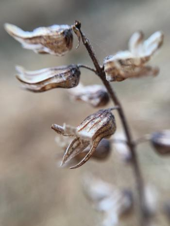 Close-up Photography of Dried Flowers