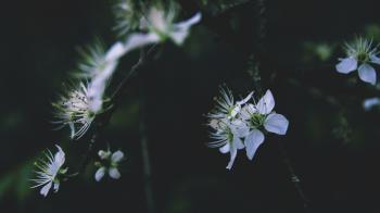 Close-Up Photography of Flowers
