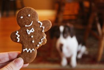 Close-up Photography of Gingerbread