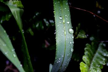 Close-up Photography of Green Leaf Plant With Water Dew