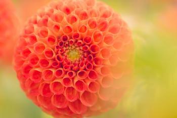 Close-Up Photography of Orange Dahlia Flower