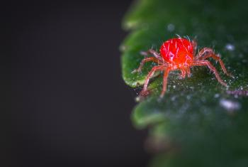 Close-up Photography of Red Spider Mites