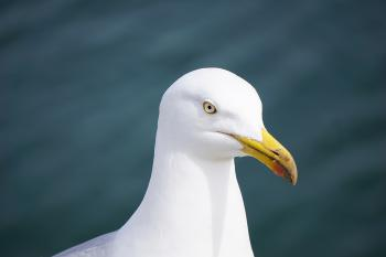 Close Up Photography of Seagull