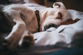 Close-Up Photography of Sleeping Dog