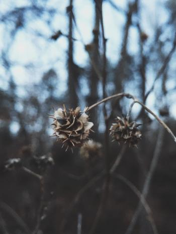 Close Up View of White and Brown Dried Flower