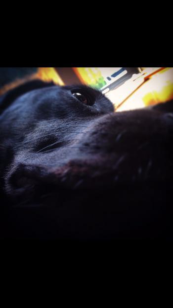 CloseUp Coco