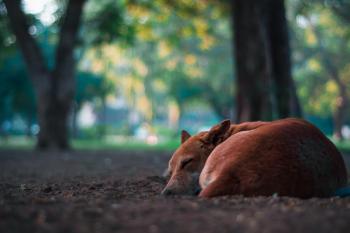 Closeup Photo of Short-coated Brown Dog