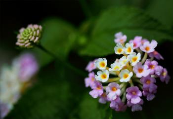 Closeup Photography of Purple and White Cluster Flowers