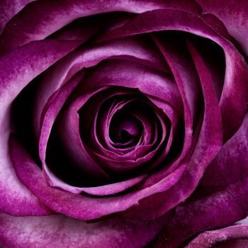 Closeup Photography of Purple Petal Flower