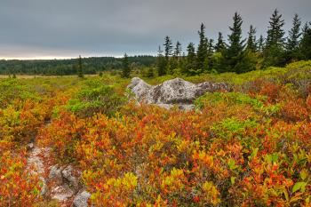Cloudy Dolly Sods Sunset - HDR