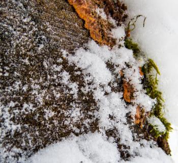 Clouseup of bark in winter