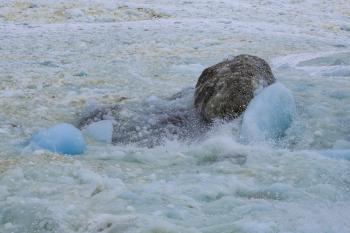 Coastal Ice at Shore