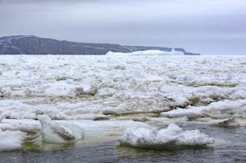 Coastal Ice Pack