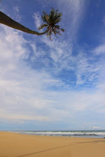 Coconut Palm Tree Near Seawater Waving on Sand Under Blue Sky and White Clouds during Daytime