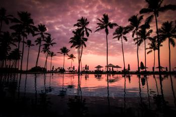 Coconut Palm Tress Beside Calm Lake Silhouette