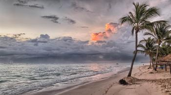 Coconut Tree on Shore during Daylight