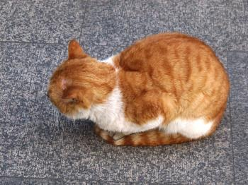 Coiled Cat on Street