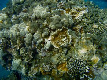 Coral Reef - Hawaii