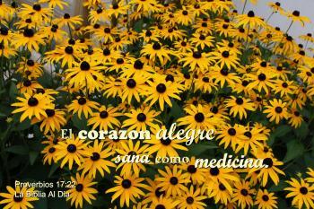 Corazon Alegre Como Medicina