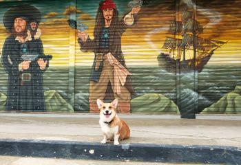 Corgis of the Caribbean