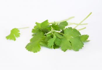 Coriander fresh herbs