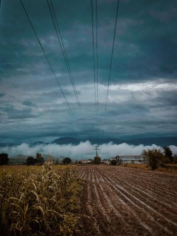 Cornfield Near Plain Field Under Gray Cloudy Sky