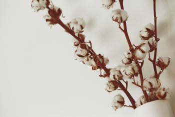 Cotton cane