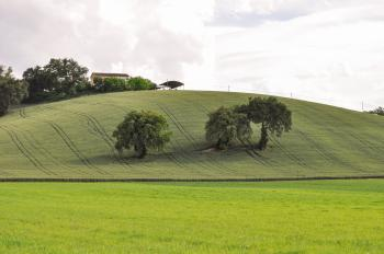 Country Life in Tuscany