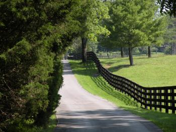 Country Road & Fence