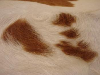 Cow leather texture