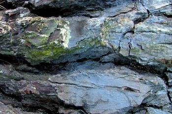Cracked Bark