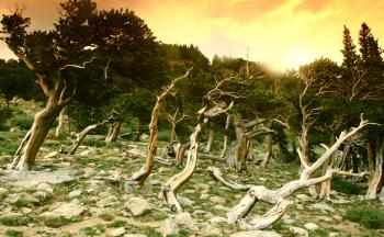 Crooked Trees Twist in the Orange Sky