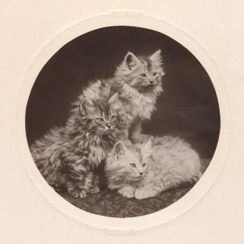 Cute Antique Kittens - Circa 1908