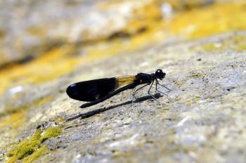 Cute dragon fly