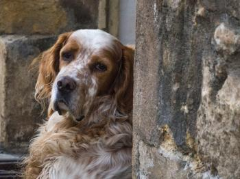 Cutest dog in st cyprien-dordogne-em10-70-300mm-20150721-P7210001.jpg