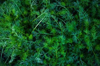 Dark Green Plants