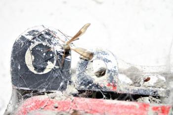 Dead crane fly