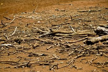 Dead Drought Tree