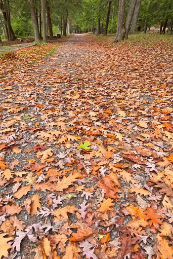 Deep Creek Autumn Path - HDR