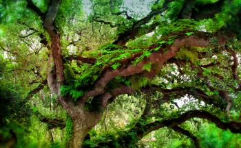 Deep Forest - Ferns Growing on Temperate Rainforest Tree